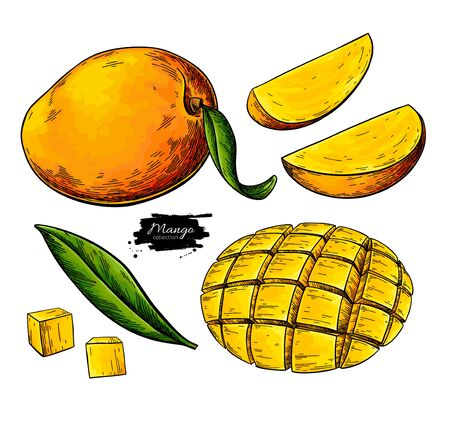 Mango vector drawing. Hand drawn tropical fruit illustration. Whole and sliced objects