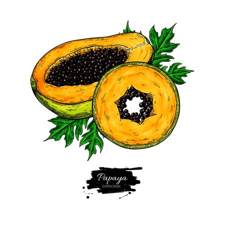 Papaya vector drawing. Hand drawn tropical fruit illustration 向量圖像