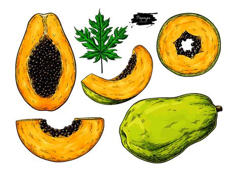 Papaya vector drawing set. Hand drawn tropical fruit illustration. Whole and sliced objects with leaves and seeds. Botanical vintage sketch for label, juice packaging design, menu