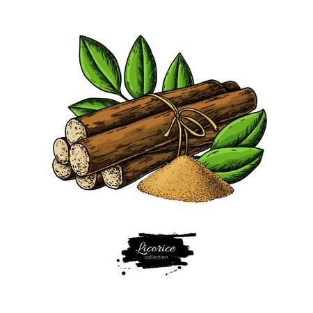 Licorice root bunch with leaves. Vector drawing. Botanical illustration
