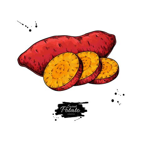 Sweet potato hand drawn vector illustration. Isolated Vegetable sliced object.