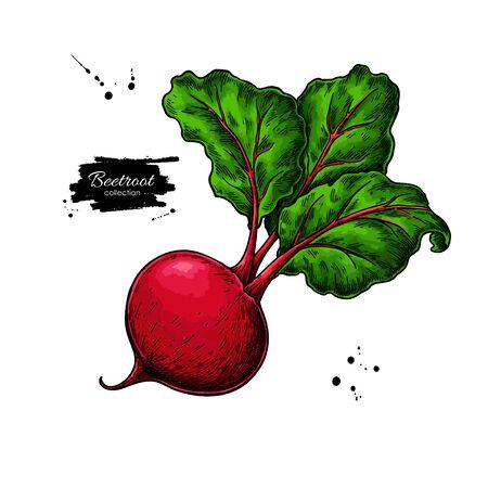 ビートルートベクトル描画。孤立した手描きオブジェクト。野菜のイラスト。詳細なベジタリアン料理のスケッチ。ファームマーケット製品。