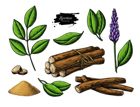 Licorice vector drawing. Bunch of roots, plants, branch with flower and leaves. Pile of ground powder. Botanical illustration. Herbal sketch. Cosmetic and medical plant