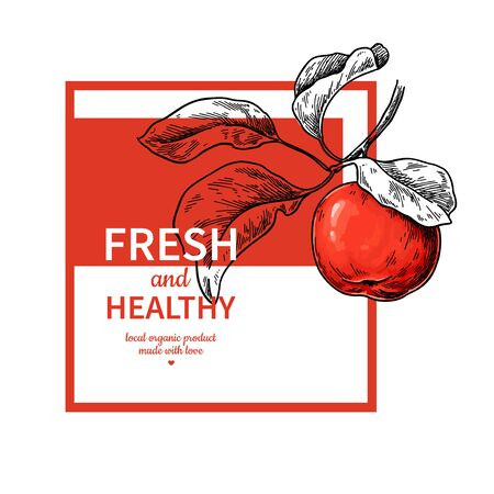 Apple label vector drawing. Fruit engraved template for juice or cider. Hand drawn illustration. Vintage banner, product packaging, design concept. Harvest poster, invitation with tree branch sketch. Standard-Bild - 139721955