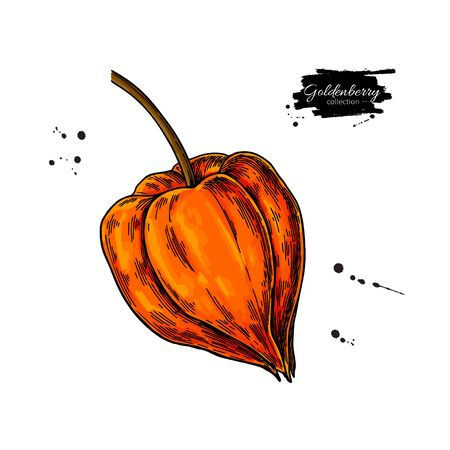 Physalis fruit vector drawing. Golden berry sketch. Botanical illustration of superfood. Hand drawn icon for label, poster, packaging design.