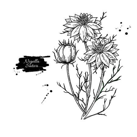 Nigella sativa vector drawing. Black cumin isolated illustration. Hand drawn botanical flowers and leaves. Vintage engraved oil ingredient. Sketch of medicinal herb. Vektoros illusztráció