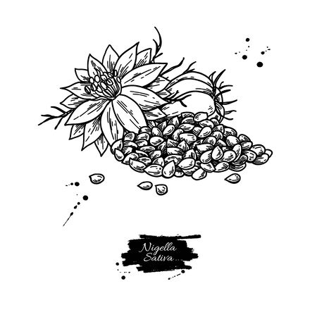 Nigella sativa vector drawing. Black cumin isolated illustration. Hand drawn botanical flowers and seed heap. Vintage engraved oil ingredient. Sketch of medicinal herb. Ilustracje wektorowe