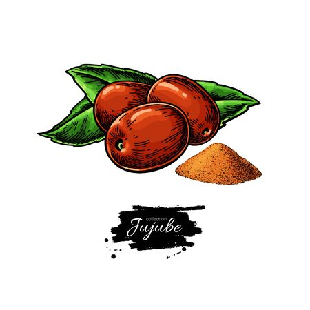 Jujube vector drawing. Chinese Date isolated illustration. Hand drawn botanical berries and leaves with powder. Иллюстрация