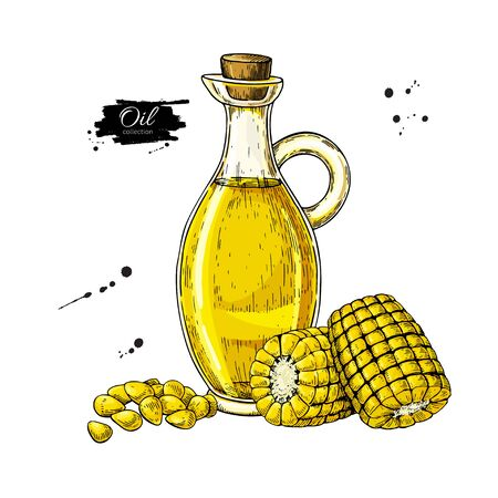 Bottle of corn cooking oil. Vector Hand drawn illustration. Glass pitcher with maize and seeds