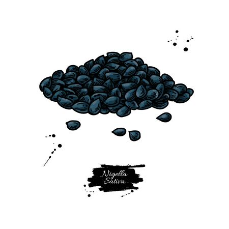 Nigella sativa seed vector drawing. Black cumin isolated illustration.
