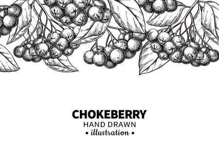 Chokeberry vector drawing. Hand drawn botanical template with berries and leaves. Engraved Illustration of herb. Sketch for tea, cosmetic, medicine. Frame for banner, label, packaging, design concept