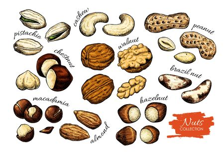 Nuts vector drawing. Detailed food illustration. Hand drawn sketch objects. Walnut, pistachio, macadamia, peanut, cashew, almond, hazelnut. Great for packaging design banner label