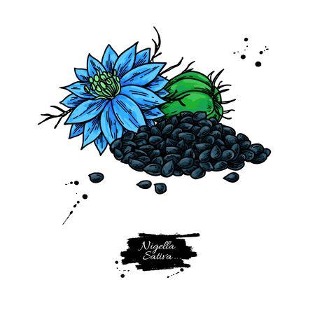 Nigella sativa vector drawing. Black cumin isolated illustration.