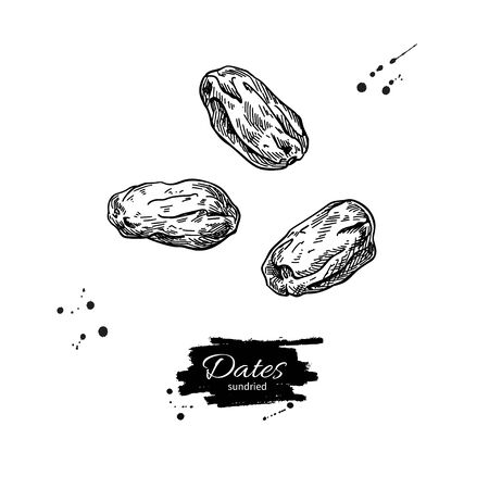 Dried dates vector drawing. Hand drawn dehydrated fruit illustration. Healthy vegan raw food snack. Sketch of granola, cereals and oat milk ingredient. Natural organic sweets