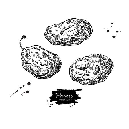 Dried plum set. Prune vector drawing. Hand drawn dehydrated fruit illustration.