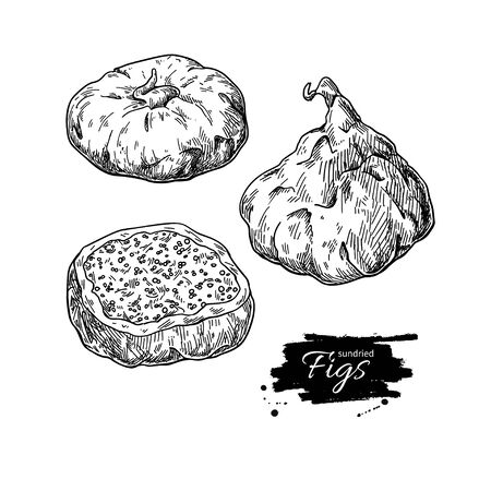 Dried fig vector drawing. Hand drawn dehydrated fruit illustration. Healthy vegan raw food snack. Sketch of granola, cereals and oat milk ingredient.Natural organic sweets Иллюстрация