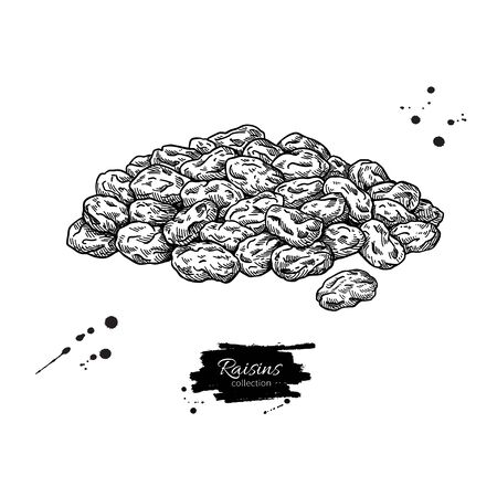 Raisins vector drawing. Dried grape heap. Hand drawn dehydrated fruit illustration. Healthy vegan raw food snack. Sketch of granola, cereals and oat milk ingredient. Natural organic sweets