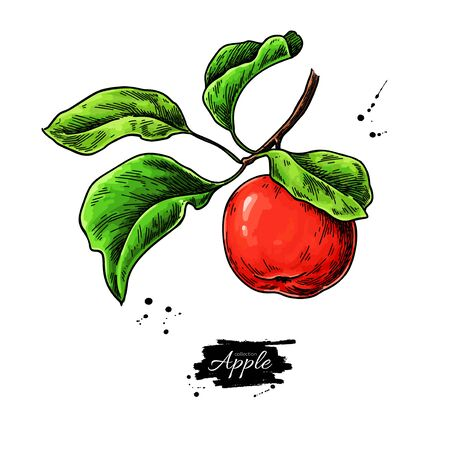 Apple vector drawing. Hand drawn tree branch with fruit and leaves. Summer food illustration.