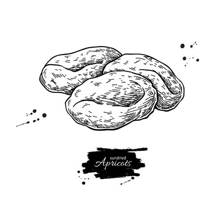Dried apricot heap vector drawing. Hand drawn dehydrated fruit illustration.