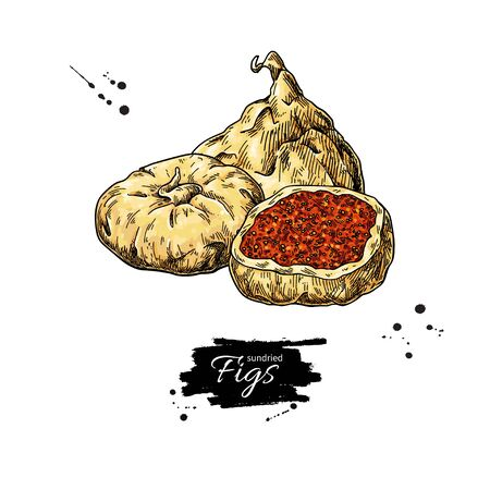 Dried fig vector drawing. Hand drawn dehydrated fruit illustration.