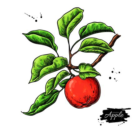 Apple vector drawing. Hand drawn tree branch with fruit and leaves. Summer food illustration. Detailed vegetarian sketch. Great for juice or cider packaging design, label, poster, print.