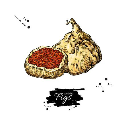 Dried fig vector drawing. Hand drawn dehydrated fruit illustration Иллюстрация