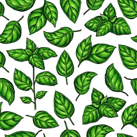 Basil seamless pattern. Vector drawing. Botanical plant and leaves illustration Иллюстрация