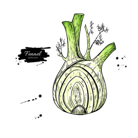 Fennel hand drawn vector illustration. Isolated Vegetable object with sliced pieces.