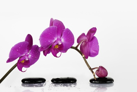 Branch orchid and three black stones covered with dew drops photo
