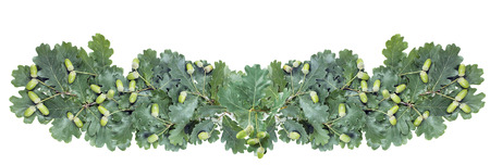 Green garland of oak branches with leaves and acorns