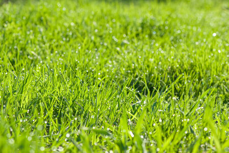 Morning green meadow covered with dew drops photo
