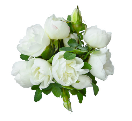 dogroses: Bouquet of fragrant flowers of white dog-roses on a white background Stock Photo
