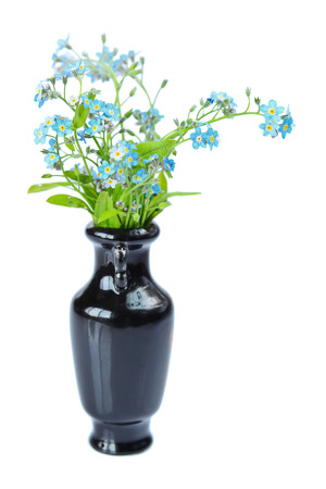 Small bouquet of blue forget-me-not in an elegant black vase isolated at white photo