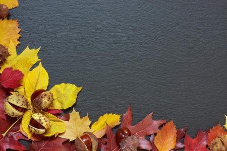 coloured background: Frame from multi-colored autumn leaves on a background of black stone