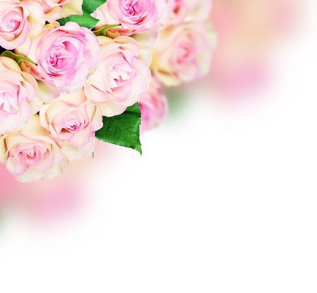 rosas rosadas: Ramo de rosas de color rosa sobre fondo de color rosa Foto de archivo