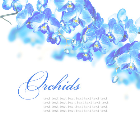 Blossoming branches of blue orchids on a white background photo