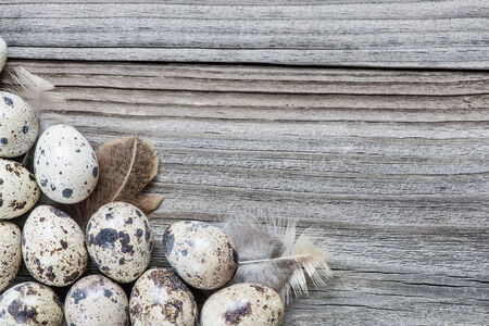 Several spotted quail eggs on the background of the old wooden boards with space for text photo