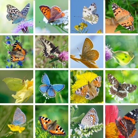 butterflies flying: Big set of photos of European butterflies in their natural habitat Stock Photo