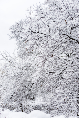 Winter park with snow-covered trees after a snowfall