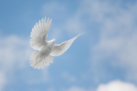 Witte duif vliegen tegen de blauwe lucht met wolken
