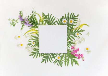 vetch: Scrapbooking page of wedding or family photo album, frame with fresh branches, green leaves, herbs, chamomile, vetch and other multicolored wildflowers on white background; top view, flat lay, overhead view