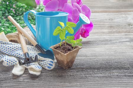 turba: Concepto de jardinería: brotes verdes de plántulas en una olla de turba, regadera azul, flores de orquídeas rosadas, rastrillo y pala sobre un fondo de madera, con espacio para texto