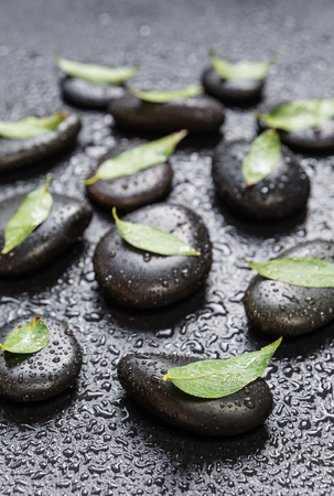 obrero: Several black basalt massage stones with green leaves on them, covered with water drops, distributed on a black background