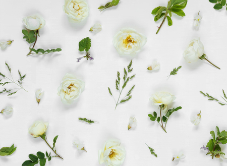 distributed: Natural background: light green leaves and white wild rose flowers on white background; top view;  flat lay Stock Photo