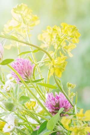 Bouquet of different yellow, pink and white wild flowers closeup outdoors Stock fotó