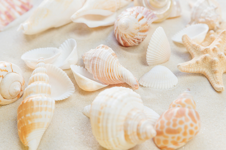 Several clams and starfishes on the background of sea sand