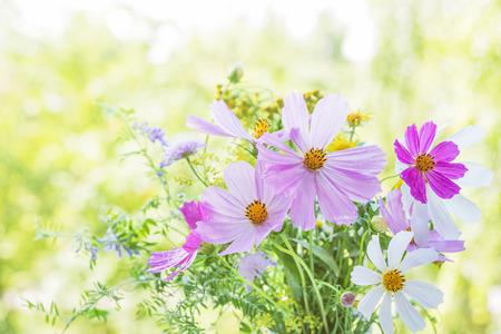 흐리게 자연 배경에 야생화의 아름 다운 여러 가지 빛깔 된 꽃다발