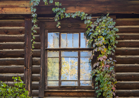 Yellow autumn trees are reflected in the window of an old wooden house, twined with green ivy Stock Photo