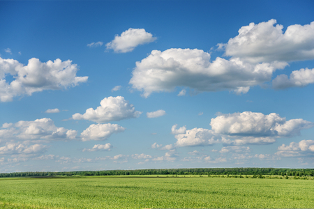 Extensive summer field with green grass and high blue sky with white cumulus clouds