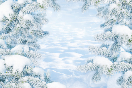 Winter Christmas scenic landscape on frosty sunny day with fir-trees covered with white snow close-up and snowdrifts. Snowy backdrop in forest on nature outdoors, with copy-space, toned in blue